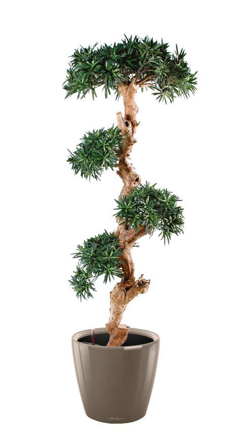 plantes de bureau pin semi naturel 170 cm plantes de bureau kollori com