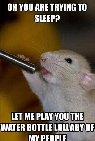 Rat Meme - 12 hilarious rat memes from around the internet rats make me happy