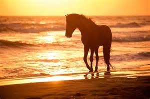Horse and Ocean Sun Sets