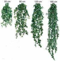 Efeu Als Zimmerpflanze : efeu floristenbedarf floristikbedarf ~ Indierocktalk.com Haus und Dekorationen