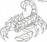 Scorpion Outline Tattoo Drawing Cat Coverup Lw Sean Lucky Getdrawings Deviantart sketch template