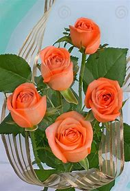 Beautiful Orange Rose Flowers