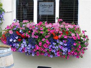 Fast, Growing, Flowers, For, Window, Boxes