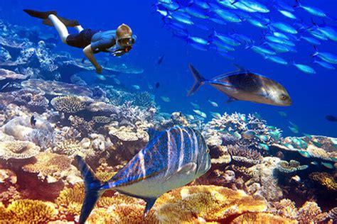 tauchschule der ocean divers   mauritius flic en flac