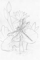 Sunrise Coloring Drawing Sketch Dragonfly Bergsma Adult Sketches Drawings Press Paintings Morning Pencil Dragonflies Line Colouring Amethyst Jody Painting Adults sketch template