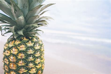 pineapple fruit  shore  stock photo
