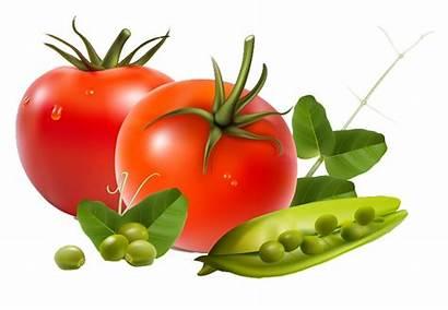 Vegetables Clip Fruits Fresh Garden Peas Montessori