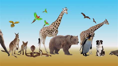 adaptation  animals meity olabs youtube
