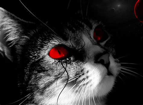 white black cat wallpaper jpg animal