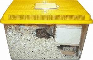 Transportbox Für Fische : degu ratgeber heimtransport ~ Michelbontemps.com Haus und Dekorationen
