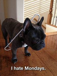 Best 25+ French bulldog quotes ideas on Pinterest | French ...