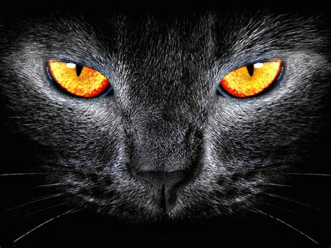 Cat Eyes Wallpapers (47 Wallpapers)  Wallpapers 4k
