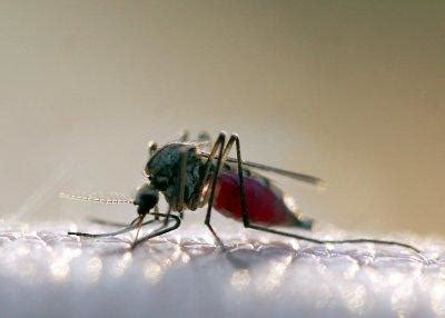 was gegen mücken tun was tun gegen m 252 cken so vertreibt m 252 cken wirksam