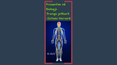 Sistemi Nervor by Ari Mustafa