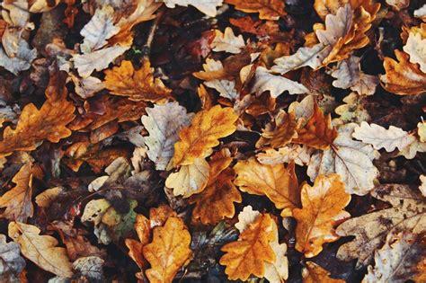Aesthetic Autumn Laptop Wallpapers by Autumn Aesthetic Laptop Wallpapers Top Free Autumn