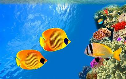 Underwater Ocean Laut Bawah Sea Wallpapers Ikan