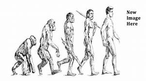 Human Evolution Chart For Kids