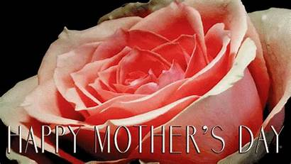 Happy Animated Rose Mothers Blooming Mom Flower
