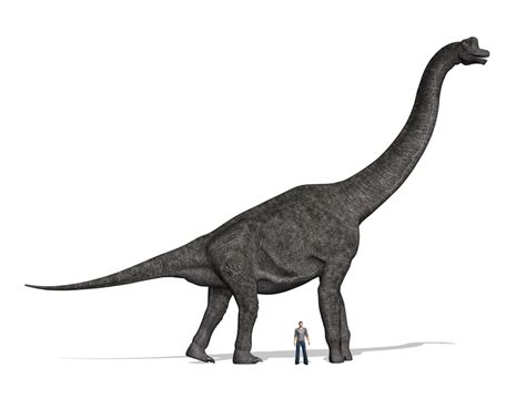 Facts About The Giraffe-like Dinosaur