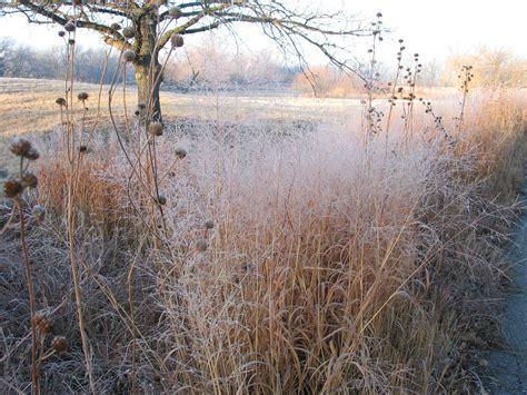 prairie gardens chaign winter prairie dyck arboretum