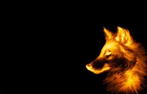 Cool Wolf Backgrounds Wolf Backgrounds Wallpaper Cave