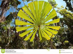 Palm Tree Leaf Tropical Rainforest Australia Stock Image ...