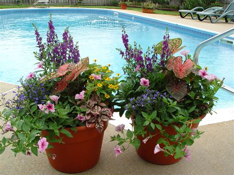 potted plants in garden container gardening pictures mississippi gardens newsletter archives container gardens