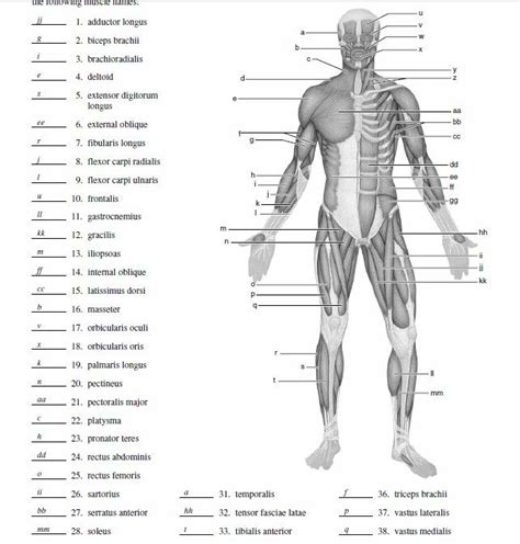 Blank Muscle Diagram To Label  School Study  Pinterest  Muscle Diagram, Anatomy And