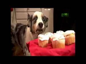 Cupcake Dog | Know Your Meme