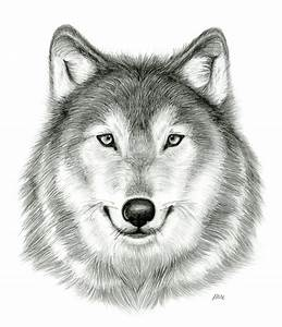 Wolf Drawing - Dr. Odd