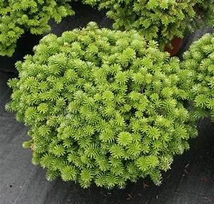 Sichtschutz Bäume Immergrün : die besten 25 sichtschutz pflanzen immergr n ideen auf pinterest auffahrt materialien ~ Eleganceandgraceweddings.com Haus und Dekorationen