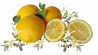 Lemons Citrus Fruit Blossom Beauty Natural Cooking