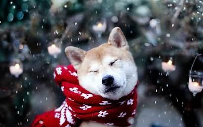 Dogs Christmas Wallpapers Snow Dog Animal Winter