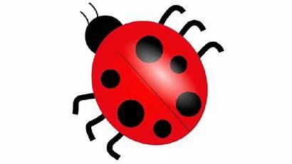 Clipart Ladybug Mariquita Dibujo Clip Domain Una