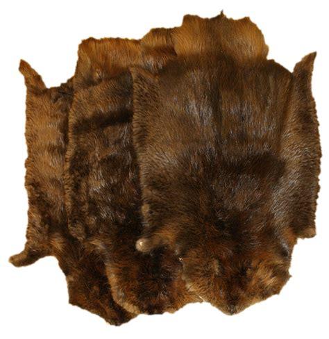 Glacier Wear - Northern Beaver Pelts For Sale