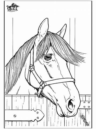 Horse Coloring Pages Horses Funnycoloring Head Advertisement