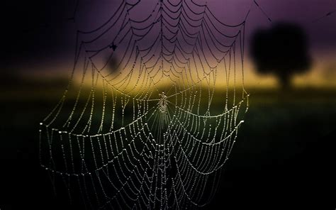 Background Spider Web by Spider Web Wallpapers Wallpaper Cave