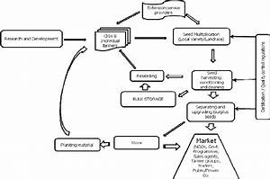 Seed production and supply along the value chain used in ...