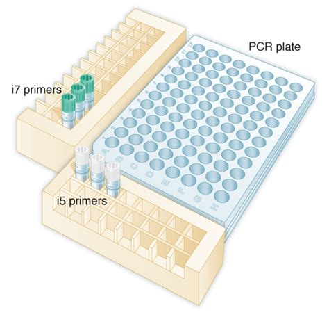 setting   pcr reaction nebnext multiplex oligos  illumina dual index primers set