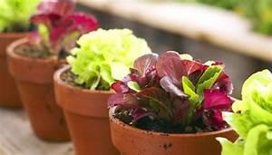 Gemüse Auf Dem Balkon : bio garten auf dem balkon ~ Lizthompson.info Haus und Dekorationen