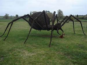 Pics of massive spiders people have caught in the uk ...
