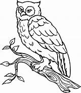 Owl Coloring Printable Owls Snowy Cartoon Outline Sheets Afunk Para Sheet Colorear Pato Printablepicture Fr Popular Templates Adults Bird Clip sketch template