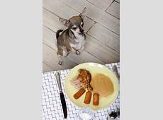 The Dog Trainer Make Your Dog's Begging Less Bothersome