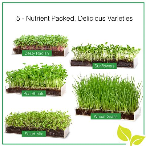 grow your own microgreens how to grow your own microgreens