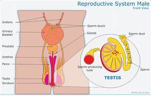 Sexual Reproduction - Pass My Exams: Easy exam revision ...