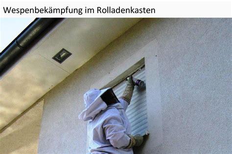 Wespennest Im Rolladenkasten Wer Zahlt by Wespenvernichtung Wespen Bek 228 Mpfen Und Vertreiben