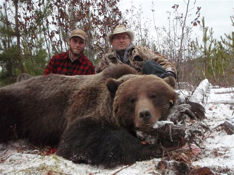 grizzly bear hunts skeena mountian outfitters bc guide