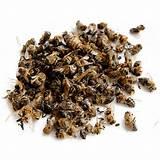 Как приготовить пчелиный подмор для лечения аденомы