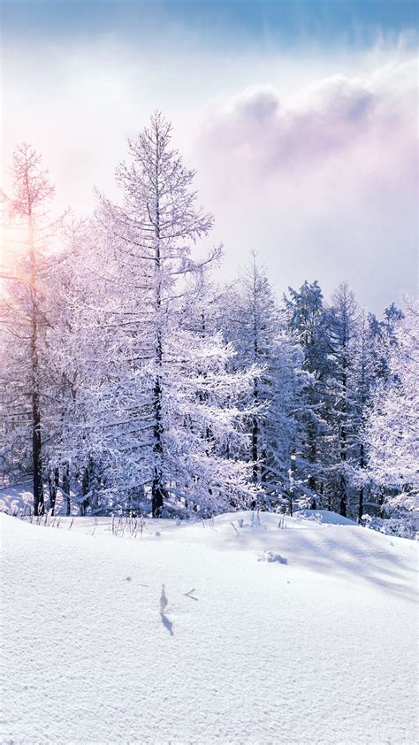 wallpaper forest snow winter clouds  nature