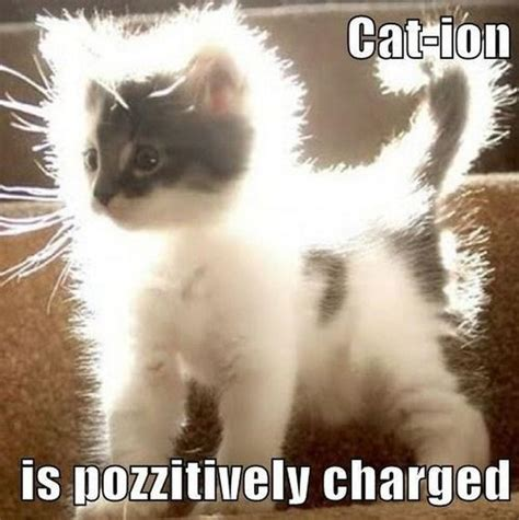 Science Cat Meme - the best science memes the internet has to offer barnorama